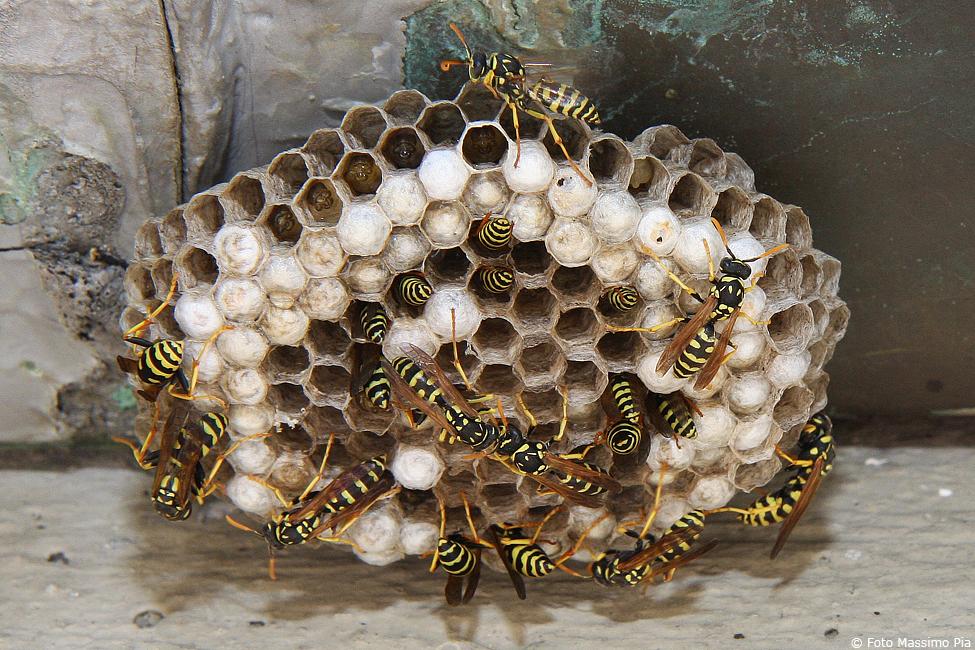 Come eliminare un nido di vespe | Fai da Te Mania