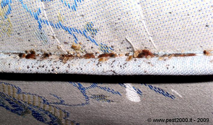 3 pratiche soluzioni per la disinfestazione delle cimici - Cimici da letto vestiti ...