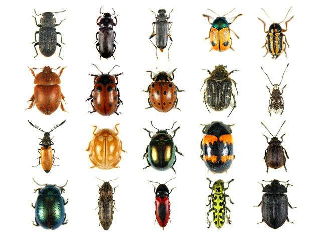 Conosci le cause della comparsa degli insetti domestici - Insetti neri in casa ...
