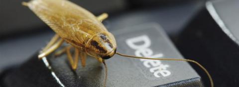 Eliminare gli scarafaggi da casa in modo semplice - Vivere ...