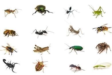 Come disinfestare la casa dalle formiche - SosAssistenza