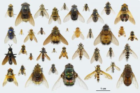 Le 4 specie pi pericolose di insetti volanti da conoscere - Da dove vengono gli scarafaggi in casa ...