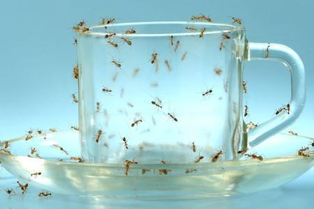 Evitare insetti cucina pulizia prima arma di prevenzione